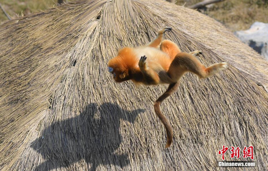 维子动物的照片