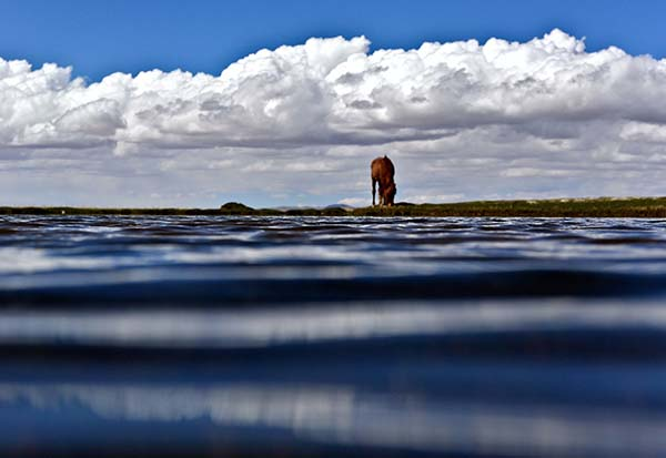 羌塘国家级自然保护区内的景色  羌塘国家级自然保护区内的景色   西藏羌塘国家级自然保护区是全国最大的陆地生态系统自然保护区,平均海拔在5000米以上,保护区内高原湖泊星罗棋布,广阔的草甸上牛羊成群,景色美不胜收。   新华社记者 普布扎西 摄